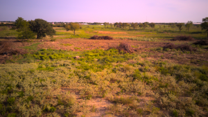 Photo of a pasture